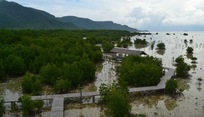 306458_pemandangan-dari-menara-pengamatan-burung-di-hutan-mangrove-pulau-karimunjawa_663_382